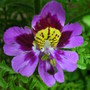Spring_flowers_008