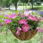 Hanging Basket - Filling in
