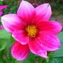 Spring_flowers_012