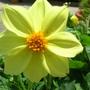 Spring_flowers_001