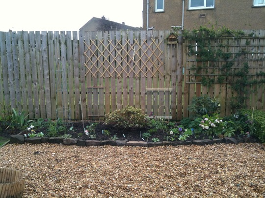 Blue and White Border after planting