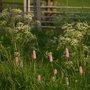 Field_plants