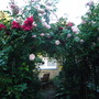 Rose Arch absolutely awash with blooms