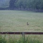 early hare stops awhile