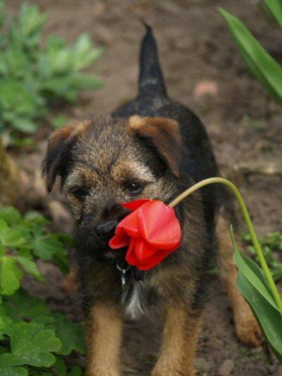 Bad puppy!