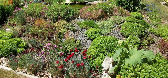 Back of the rockery today