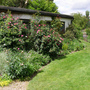 My garden in late May 2011