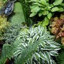 My_garden_2011_069