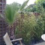 washy robusta