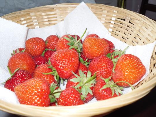 STRAWBERRIES  FOR  TEA  (AGAIN)