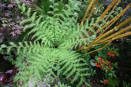 Tree fern from above