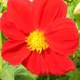 June_flowers_010