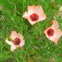 June_flowers_002