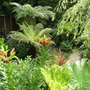 Tree ferns and Lily.