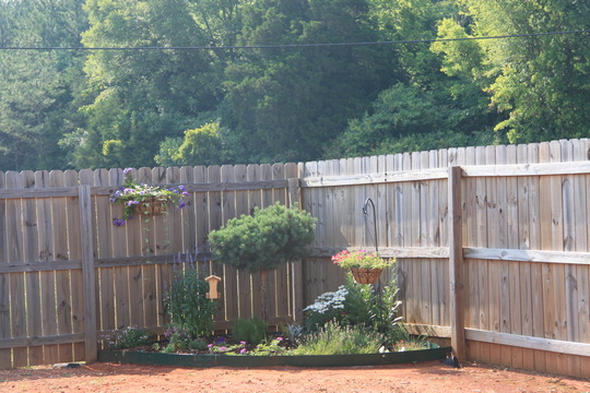 June 9, 2011 My Back Garden