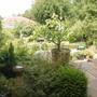Back Garden June 2011