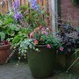 Garden_rainy_june_009