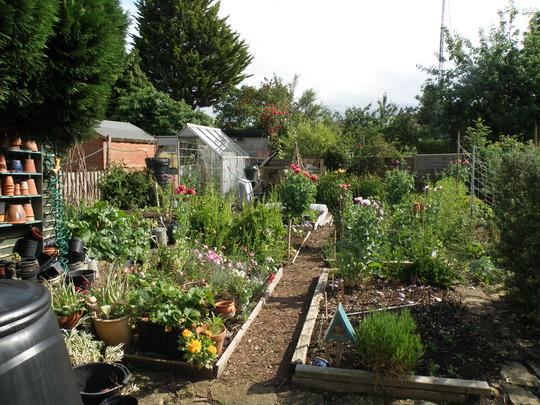 Vegetable garden in June.