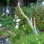Garden_rainy_june_001