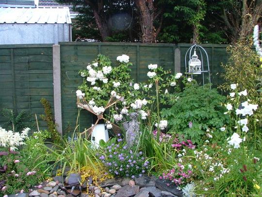 pond area 2, iceberg roses