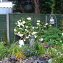 Garden_rainy_june_002