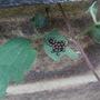 little ladybird eggs