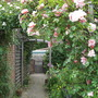 Rose arch and path to garden gate