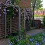 Clematis montana and bluebells