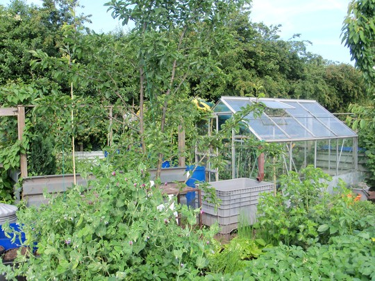 my allotment in full production mode