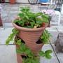 small strawberry planter