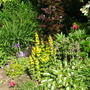 Part of my garden ... Jun 2011