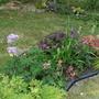 mums bog garden patch