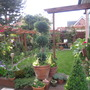 garden mid june 2011 018