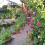 garden mid june 2011 024