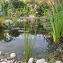 garden mid june 2011 023