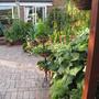 garden mid june 2011 026