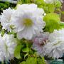 Flowers_007_copy