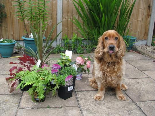 New plants & Benji