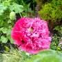 Poppy     seeds off Amy