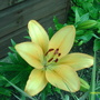 Lily out at last !