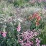 Laurent - Perrier Garden