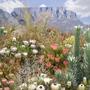 Western Cape Floral Kingdom..Chelsea Flower show