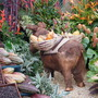 Cocoa pods and seeds, donkey...Chelsea flower show 2011