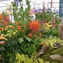 Oranges and blues....lovely at Chelsea flower show 2011