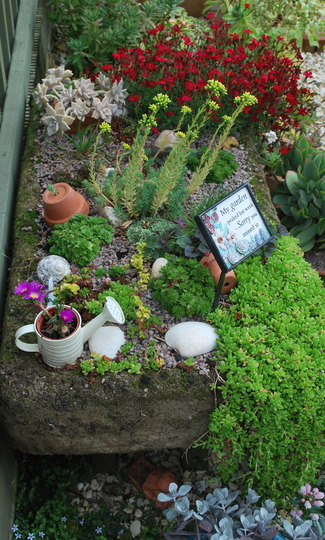 Trough with alpines for summer colour.....
