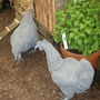 Quirky Wire Chooks!