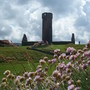 Thrift_sea_pink_flowers_on_top_of_peel_castle