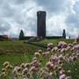Thrift sea pink flowers on top of Peel castle