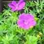 Garden_pics_2011_005