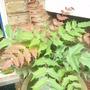 My strange plant
